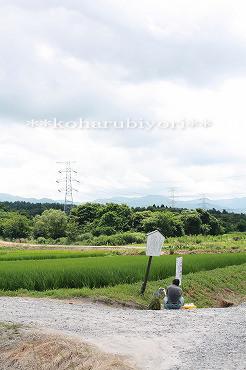 本田の湧水